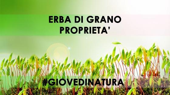 erba di grano - esistere bene - #GIOVEDINATURA